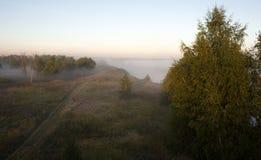 Bäume im Nebel Stockfotos