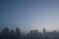 Bäume im Nebel an der Dämmerung Stockfoto