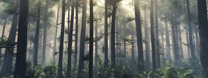 Bäume im Nebel Der Rauch im Wald stockbilder