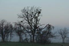Bäume im Nebel des frühen Morgens Stockfotos
