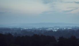Bäume im Nebel nachts lizenzfreie stockbilder