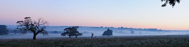 Bäume im Nebelpanorama Stockfotos