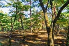 Bäume im Park Stockfotografie