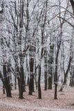 Bäume im Park bedeckt mit Frost Lizenzfreie Stockfotos
