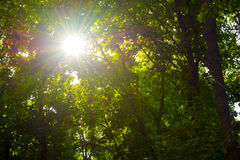 Bäume im Park bei Sonnenuntergang Stockfotos