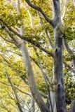 Bäume im Park bei Sonnenuntergang Lizenzfreies Stockbild