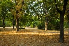 Bäume im Park bei Sonnenuntergang Lizenzfreie Stockfotografie
