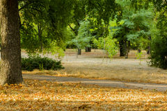 Bäume im Park bei Sonnenuntergang Lizenzfreies Stockfoto