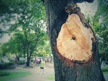 Bäume im Park mit Nahaufnahmen im Tageslicht stockbilder