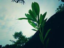 Bäume im Park mit Nahaufnahmen im Tageslicht lizenzfreie stockfotografie