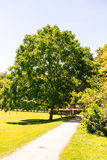 Bäume im Park mit Weg Lizenzfreies Stockfoto