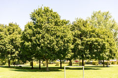 Bäume im Park mit Weg Stockfotos