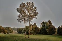 Bäume im Park Muskauer im Nebel während des Herbstes Stockfotografie