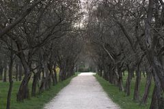 Bäume im Park sind mehr Scharlachrot eingeschaltet lizenzfreie stockfotografie