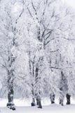 Bäume im Raureiffrost Stockbilder