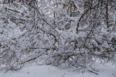 Bäume im Schnee stockfoto