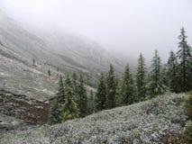 Bäume im Schnee lizenzfreie stockfotografie
