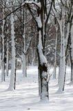 Bäume im Schnee Lizenzfreies Stockbild