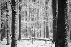 Bäume im Schnee Stockfotos