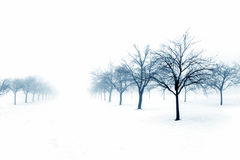Bäume im Schnee Lizenzfreie Stockbilder