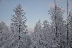 Bäume im Schnee Stockfotografie