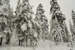 Bäume im Schnee Russland Landschaft mit einem Stein im Wasser 2018-jährig Stockfotos