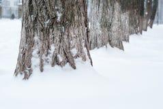 Bäume im Schneeabschluß oben stockfotos