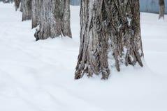 Bäume im Schneeabschluß oben stockbild