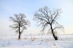 Bäume im Schneefeld Lizenzfreie Stockfotografie
