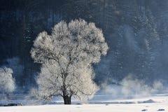 Bäume im Schutz eines Winterblizzards Hintergrund auf einem Winterthema Lizenzfreie Stockfotografie