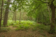 Bäume im schwarzen Park Lizenzfreie Stockfotografie