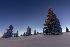 Bäume im schwarzen Wald des Schnees Stockfotografie