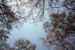 Bäume im Sommer Lizenzfreies Stockfoto