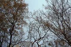 Bäume im Sommer Lizenzfreies Stockbild