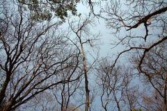 Bäume im Sommer Stockfoto