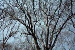 Bäume im Sommer Lizenzfreie Stockbilder