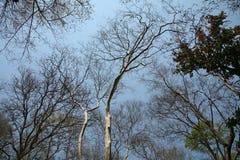 Bäume im Sommer Lizenzfreie Stockfotos