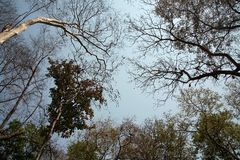 Bäume im Sommer Stockfotos