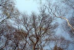 Bäume im Sommer Stockbild