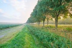 Bäume im Sonnenlicht am Fall Lizenzfreie Stockbilder