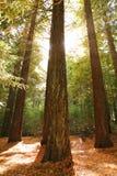 Bäume im Sonnenschein Stockfotos