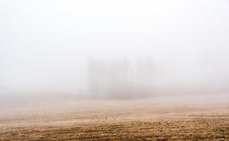 Bäume im starken Nebel Stockfoto