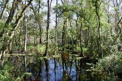 Bäume im Sumpfwasser stockfoto