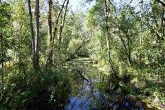 Bäume im Sumpfwasser entlang einem Strom stockbild
