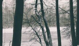 Bäume im Wald Stockfotos