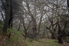 Bäume im Wald Lizenzfreie Stockbilder