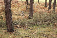 Bäume im Wald Stockfoto