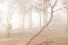 Bäume im Wald bedeckt im Nebel während des Herbstes Lizenzfreie Stockfotografie