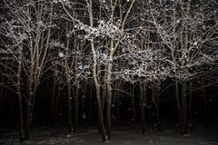 Bäume im Wald bedeckt mit Schnee in der Nacht mit Schneefällen, bewölkter Himmel Lizenzfreies Stockbild