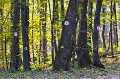 Bäume im Wald markiert mit Herzen lizenzfreies stockbild